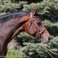 amber, pony lane farm photoshoot-4.jpg