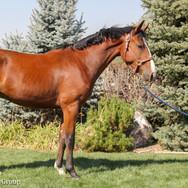 pony lane farm photoshoot, quest.jpg