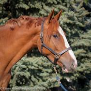 kortana, pony lane farm photoshoot-3.jpg