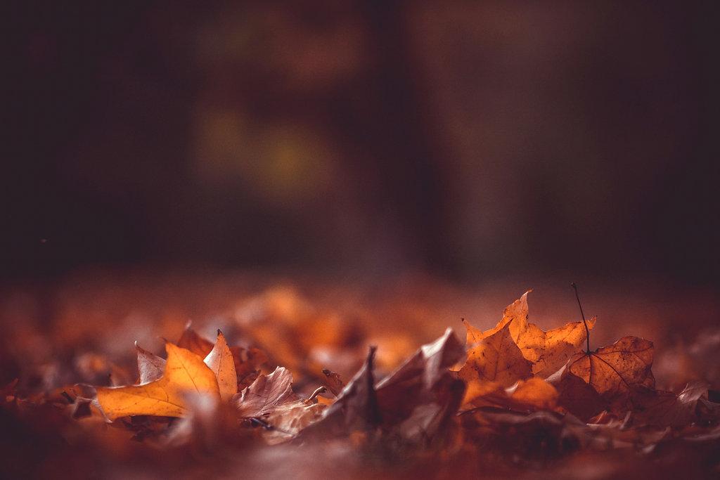 Autumn Leaves_edited.jpg