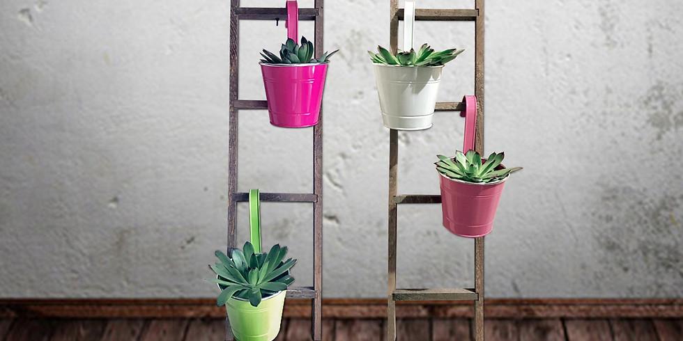 Wood Ladder Succulent Arrangement