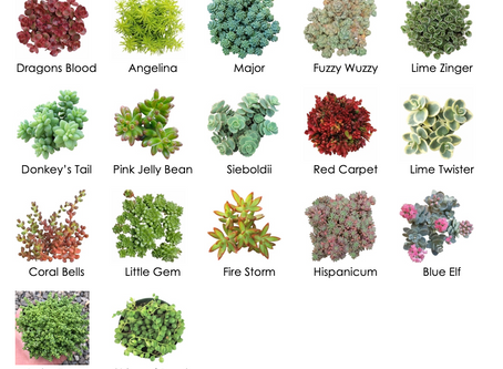 Succulent Reference Guide