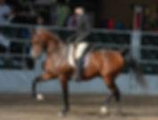 Arabian Horse For Sale In Iowa