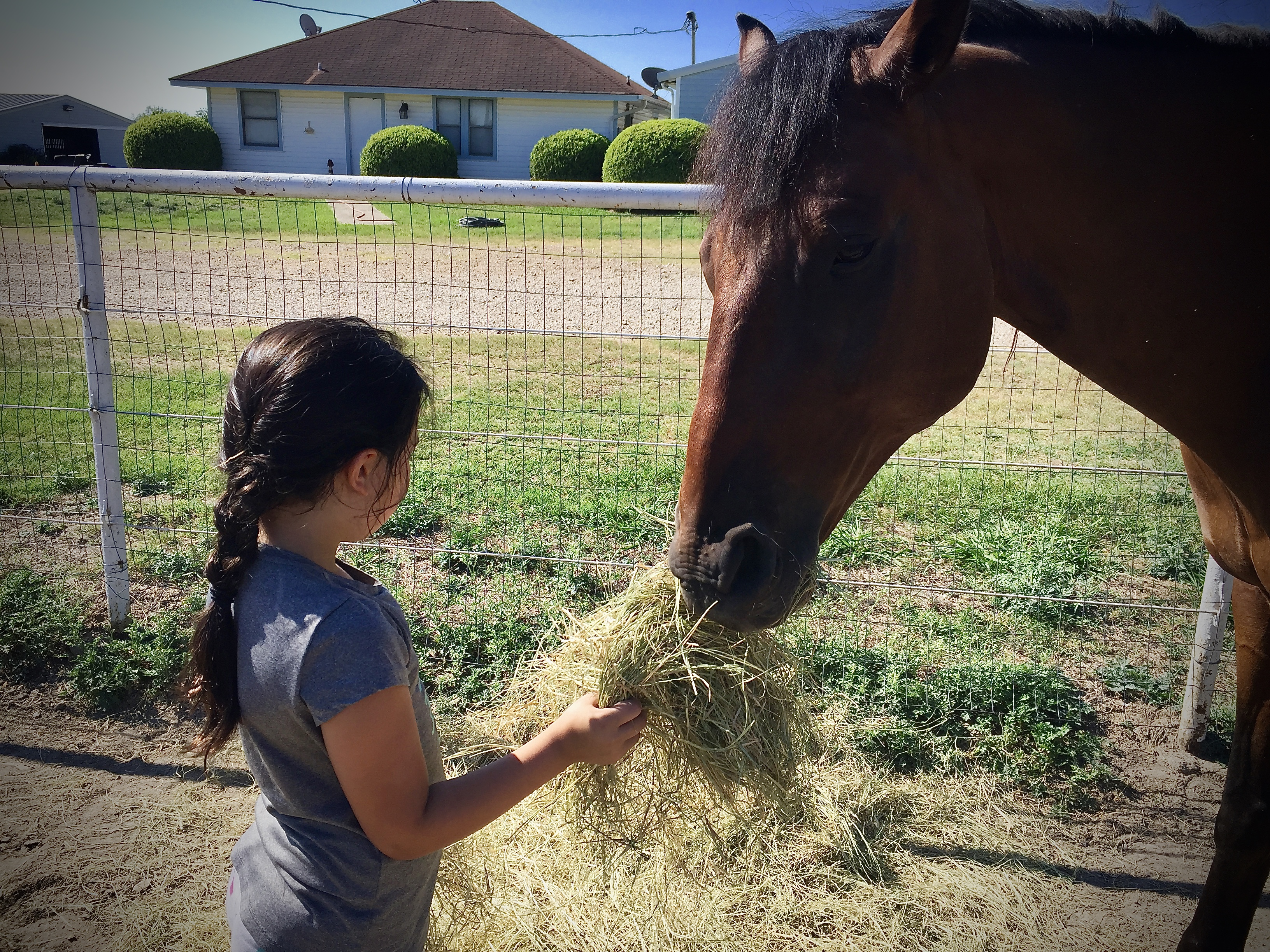 M-Bar-K Farms | horseback riding