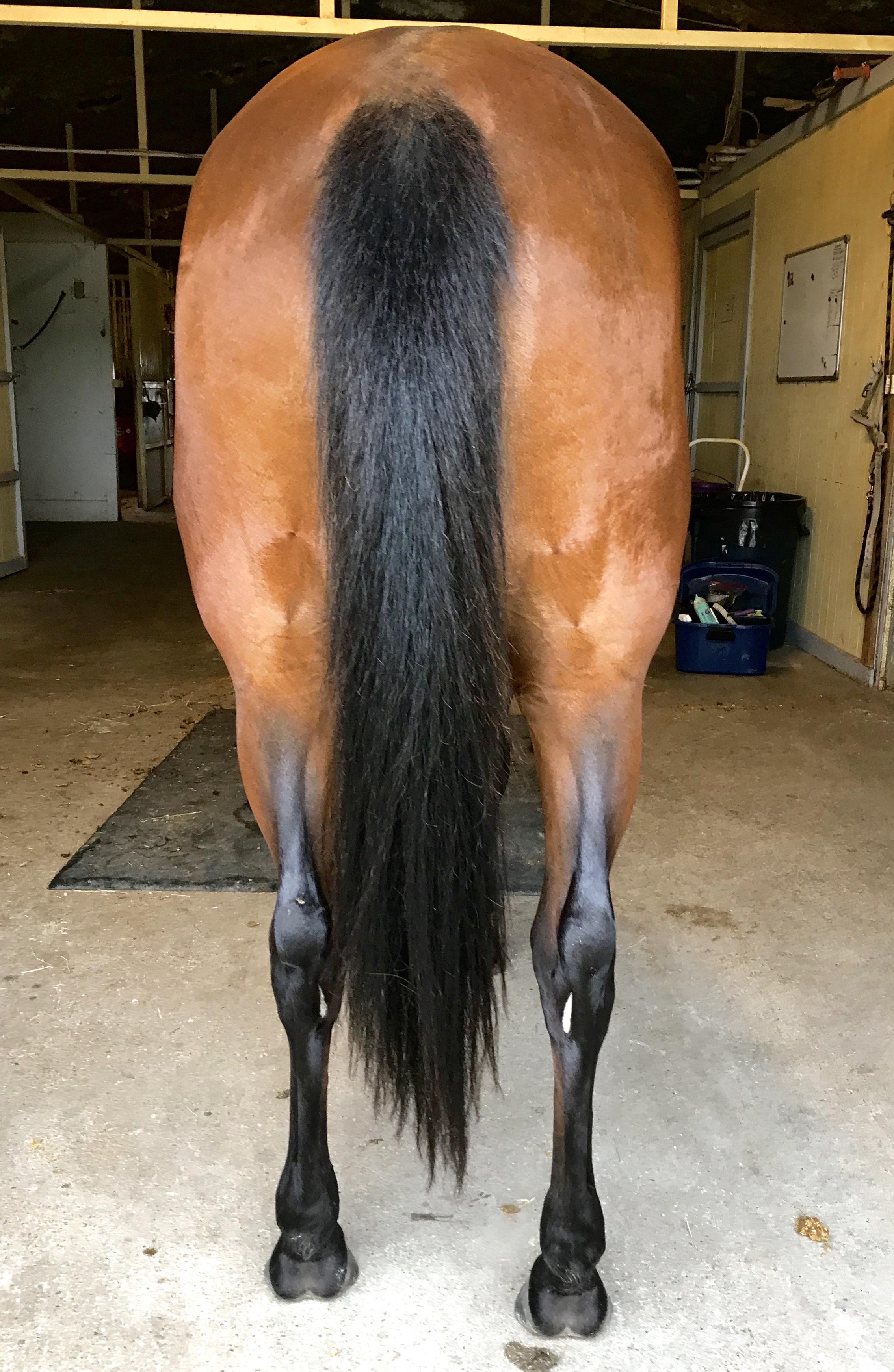 Romy Horse for sale