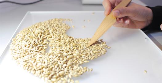 variety-identification-process-seed-grai