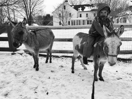 Meet the Donkeys!