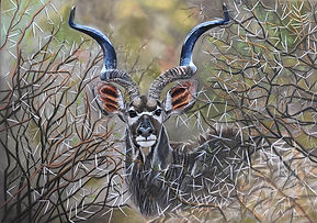 Horns through thorns 100 x 135.jpg
