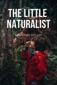 Kindergarten Nature Study-Rewildhood