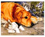 צביעה לפי מספר - כלב וחתולים