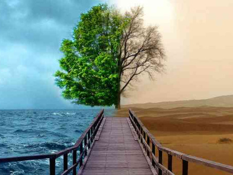 Una ayuda para nuestra economia y ecologia