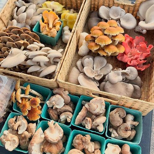 Mushroom CSA - Full Share (12 Weeks)
