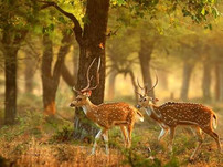Explore Zoological World in Van Vihar National Park with Nitu Tripathy