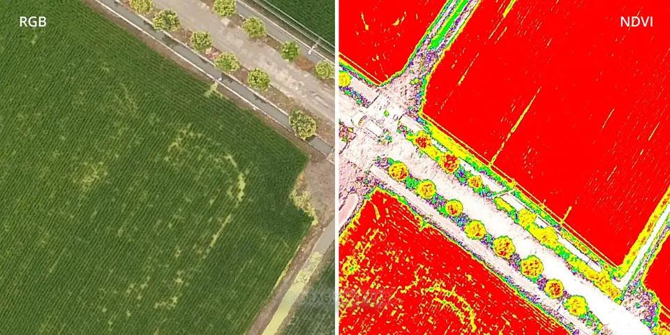 飛行中,可隨意切換可見光以及NDVI資訊,異常一眼可見,立即進行決策與分析。圖片來源:DJI官方網站