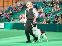 Heel work Crufts World Cup