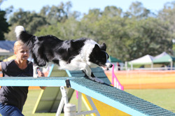 Zest Dog Walk State Titles Qld