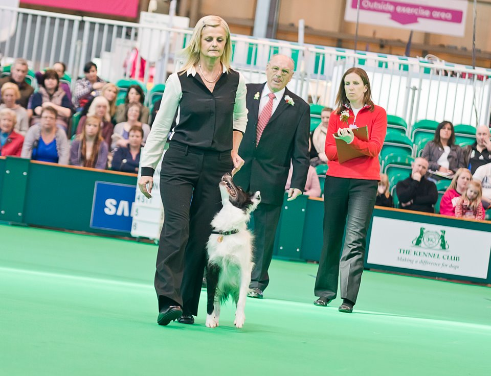 Heelwork Crufts World Cup