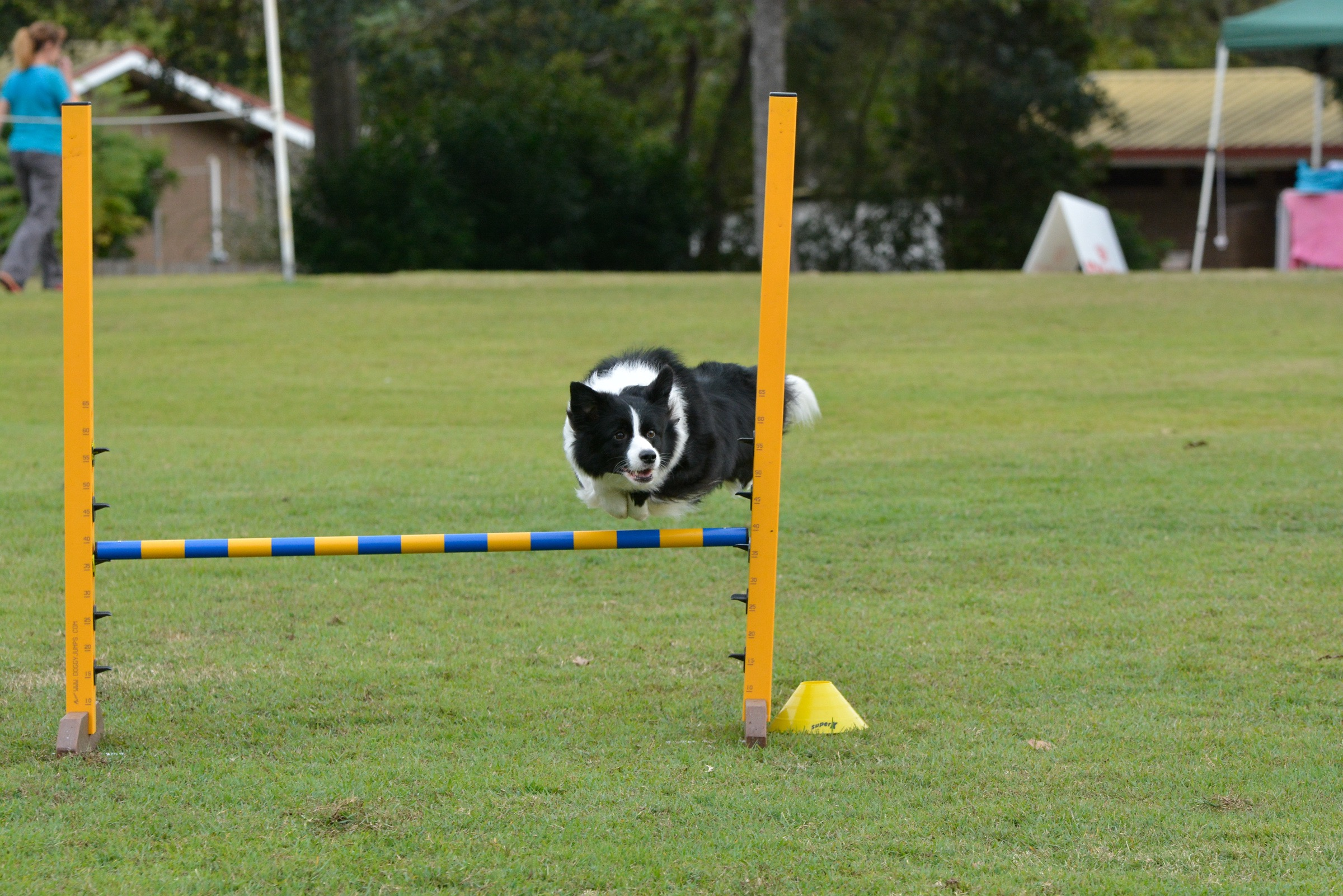 Border Collie National