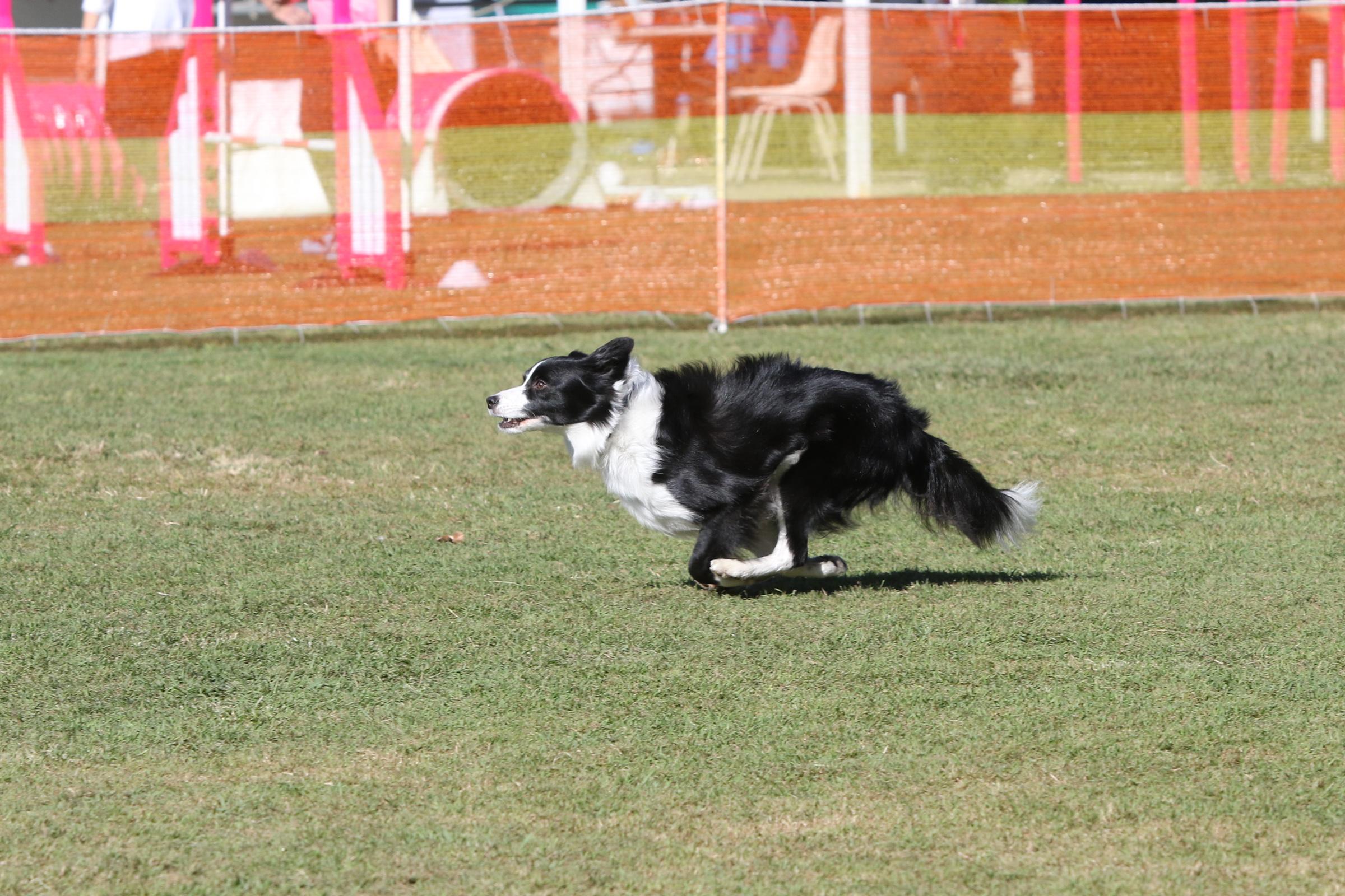 Zest on the run