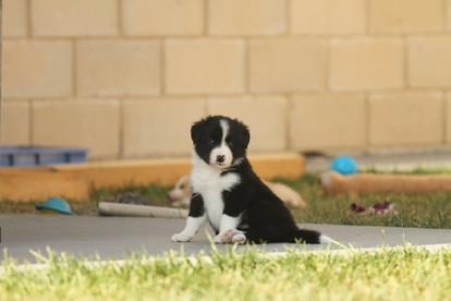Puppy !.jpg