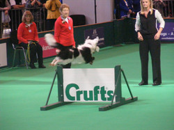 Crufts World Cup