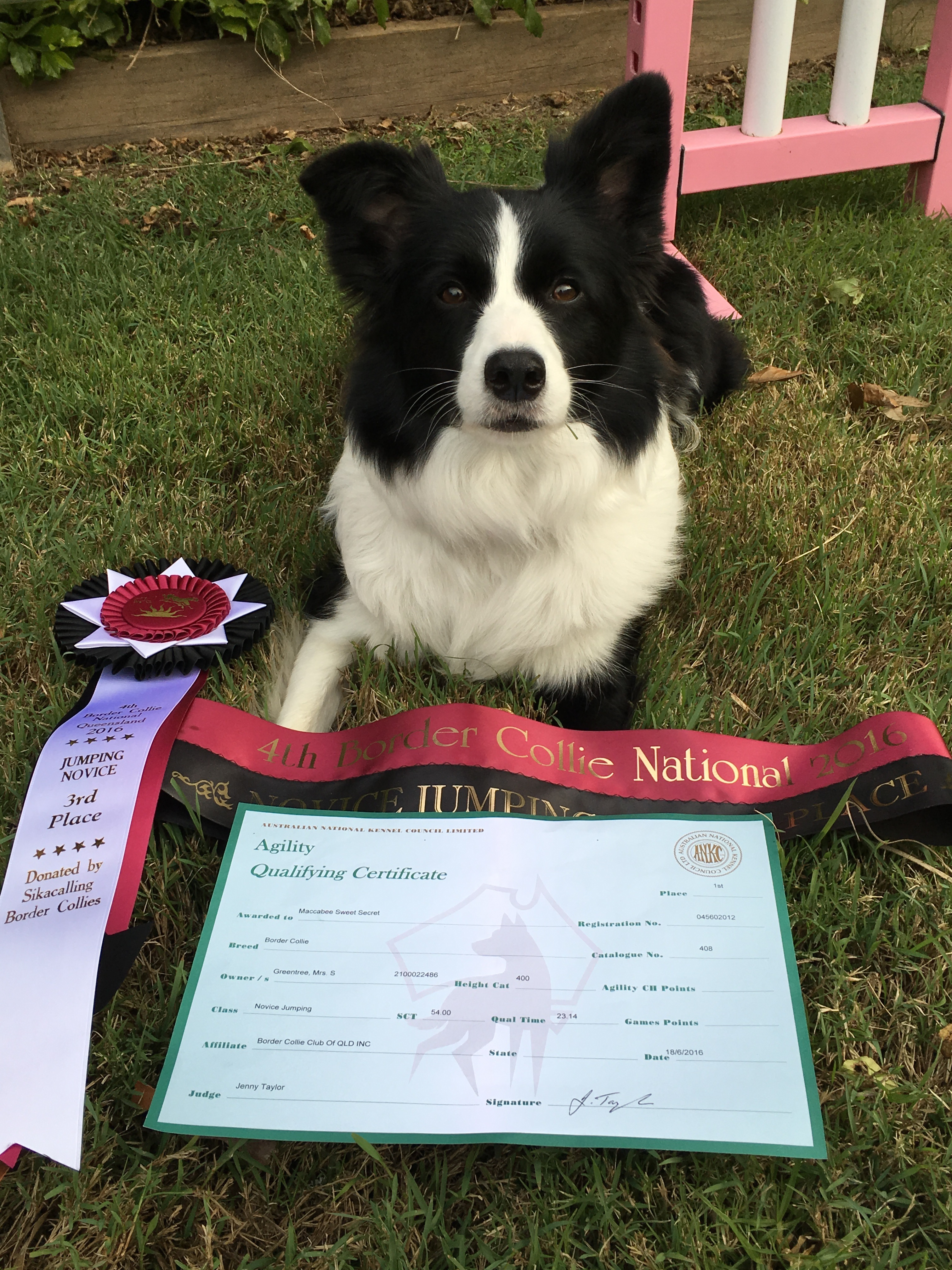 Zest Border Collie National