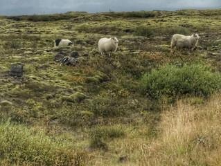 Dessine-moi trois moutons