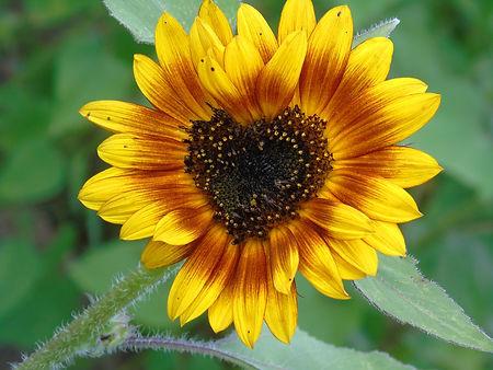 lovesunflowers.jpg