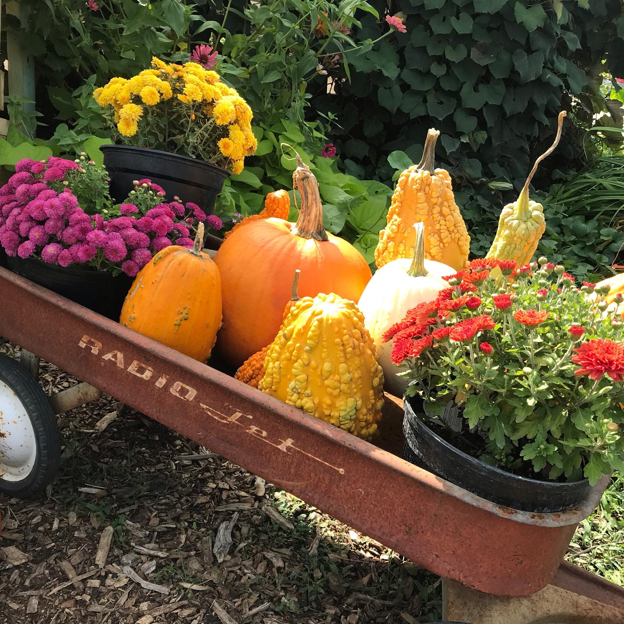 Wagon Pumpkin Flower.jpg