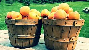 apricots3.jpg