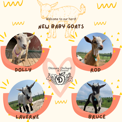 Baby Goats.png