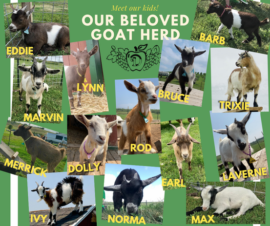 Whole Gang of Goats.png
