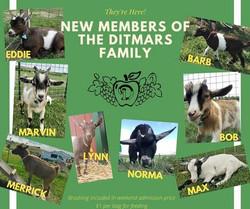 Goat Family 2020