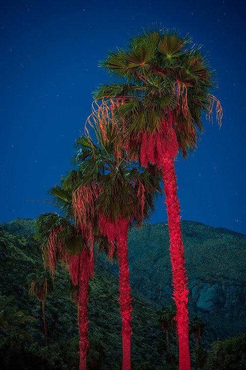 3 Red Palms