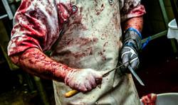 abattoir, slaughter, butcher, blood