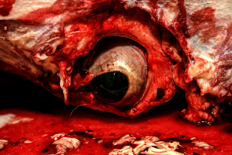 abattoir, slaughter, blood, horror