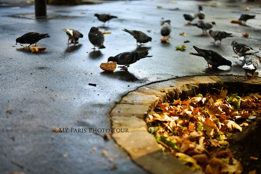palomas en otoño