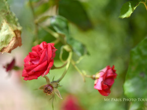 How to photograph flowers in Paris