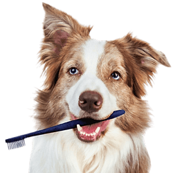 dogdentalcleaningbanner.png