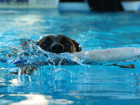 Run, Leap, Splash – Dock diving with your canine companion