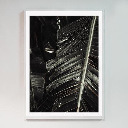 Botanik 01