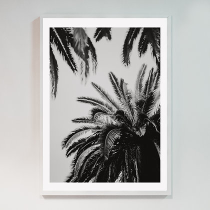 Barcelona Palm 02