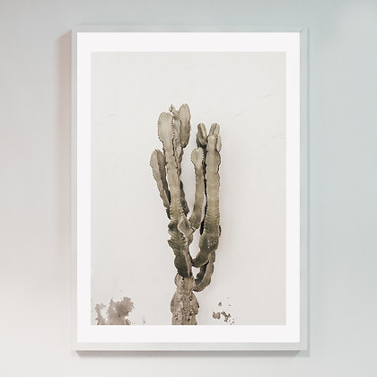 Cactus Lanzarote 02