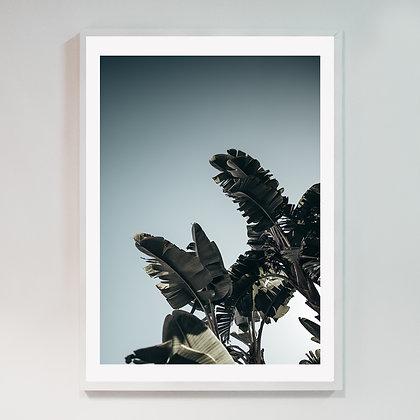 Saskia's Palmleafs 01