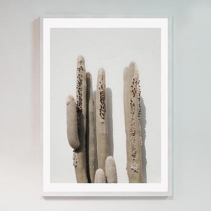 Cactus Lanzarote 01