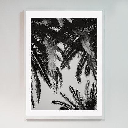 Barcelona Palm 01