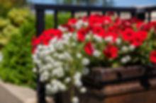 Avalon Gardens-158.jpg