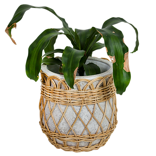 Terracotta Pot with Decorative Woven Rattan