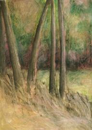 Corner Trees
