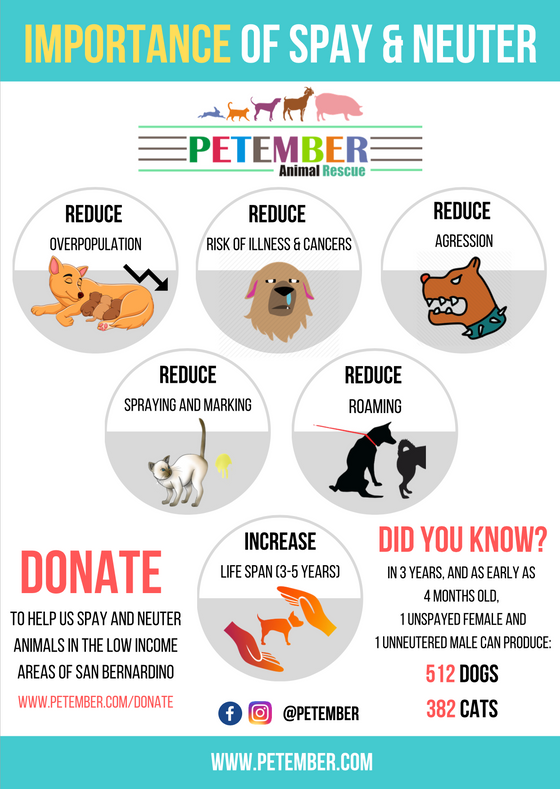 Importance of Spay/Neuter of your animal